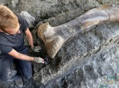 بالفيديو.. العثور على فخذ أضخم ديناصور عاش على الأرض