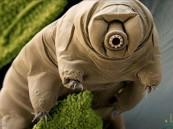 """كشف سر """"أقوى مخلوق على وجه الأرض"""".. وهكذا يتغلب على النووي!!"""
