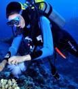 العثور على علاج مرض السل في قاع البحر !!