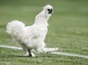 """مقاضاة لاعب كرة قدم .. والسبب """"دجاجة"""""""
