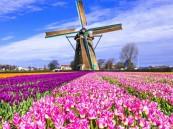 """بدءً من العام القاد 2020… هولندا تحتفظ باسمها الرسمي """"Netherlands"""""""
