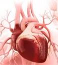 """دراسة علمية: الأوعية الدموية سبب ضعف """"قلب المرأة""""!"""