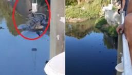 بالفيديو: شاهد النهاية الصادمة لسائح حاول العبث مع التماسيح
