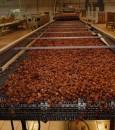 """في الأحساء .. 30 مصنعًا يؤمّنون حاجة السوق بـ """"34""""صنفاً من التمور ومنتجاتها التحويلية"""