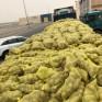 صور.. إتلاف 51 طناً من البطاطس الفاسدة كانت في طريقها للأسواق بالشرقية