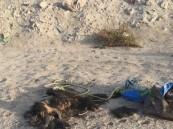 """فيديو: من قلب """"الجفر"""" .. حيوانات نافقة وقاذورات تؤرق السكان"""