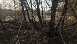 بالصور..  قطع جائر لأشجار العمران  والفاعل مجهول !!