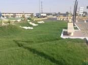 """بالصور.. """"بلدية عريعرة"""" تستكمل استعداداتها لاستقبال عيد الأضحى المبارك"""