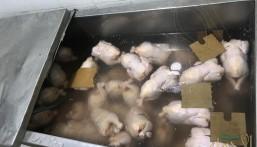 """بالصور.. """"أمانة الأحساء"""" ترصد 721 مخالفة وتصادر 6 أطنان أغذية فاسدة خلال شهر"""