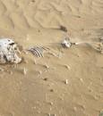 """العثور على """"رفات موتى"""" شمال القنفذة .. صورة صادمة ومواطن يكشف التفاصيل"""