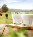 هل يسبب حليب الأبقار سرطان الثدي؟