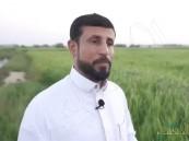 """من قلب الأحساء … """"السالم"""" يستغنى عن الوظيفة الحكومية ليُبدع في زراعة الأرز الحساوي"""
