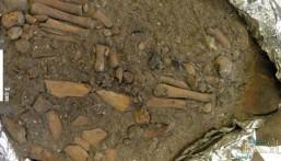 بقايا طفل عمرها 8000 عام في جزيرة إندونيسية