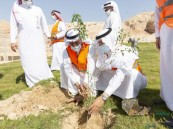 """بعد غرس 720 ألف شجرة منذ إطلاقها في الأحساء .. حملة لإتمام مبادرة """"زراعة مليون شجرة"""""""