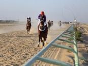 ميدان فروسية الأحساء يقيم السباق الرابع عشر للموسم الحالي 1442