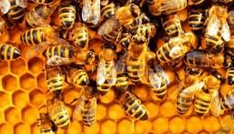 """لا يقل العمر عن 21 سنةً .. تعرّف على شروط تمويل """"مربي النحل"""""""