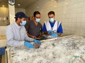 شاهد … هذا ما وجدته فرق وزارة الزراعة الرقابية في سوق الأسماك المركزي بالأحساء