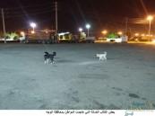 """كلاب ضالة تنهش مسناً أمام محطة وقود .. و""""الهلال الأحمر"""" يباشر الحالة"""