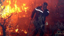 بالفيديو …. ارتفاع حصيلة ضحايا حرائق الغابات في الجزائر