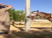 """مغردين """"تويتر"""" يطالبون بمحاسبة معذبي الحصان"""