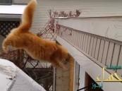 """بالفيديو .. """"القط الفاشل"""" يحصد أكثر من 4 ملايين مشاهدة"""