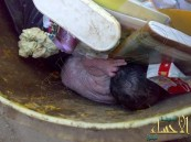 في الأحساء .. في مشهد مأساوي العثور على لقيط في القمامة و وضعه الصحي حرج