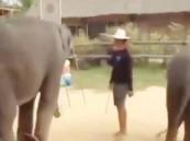 بالفيديو ….  أفيال تؤدي رقصة غانغام ستايل