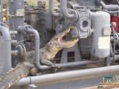 بالصور .. محطة مياه الشعيبة تكشف حقيقة ظهور تمساح بأحد أجهزتها