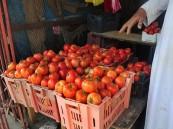 """""""حماية المستهلك"""" تدعو الجميع إلى مقاطعة شراء الطماطم أسبوعاً"""