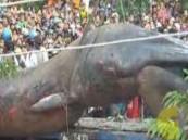 بالفيديو .. ظهور حيوان عملاق في فيتنام يثير الدهشة