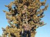 الدفاع المدني ينقذ  قطة علقت على شجرة مرتفعة ثلاث أيام