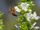 السجن امرأة بولندية قتلت.. مليوني نحلة