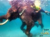 بالصور … الشيخ حمدان بن محمد يسبح بجوار الفيل راجان