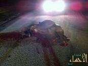 بالصور .. استمراراً لإسترخاص الأرواح «جملان» يتسببان في حادث شنيع