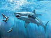 القرش أقرب للإنسان منه إلى الأسماك الأخرى