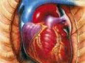 علماء يابانيون … شيخوخة القلب يمكن منع حدوثها .