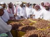 دخول تمور المناطق والمجاورين يؤثر على أسعار منتج واحة الأحساء .