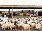 بلدي الأحساء يعقد الملتقي الأول لتجار الأنعام