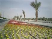 ضمن إستعدادها لعيد الأضحى المبارك : 500 ألف شتلة زهور تزين شوارع وحدائق الأحساء .
