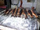 السمك المشوي أو المطبوخ أفيد للصحة .