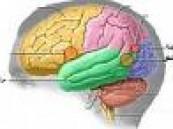 الهواتف الخلوية.. بريئة من سرطان المخ .
