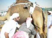 تفوق إماراتي في مسابقة الحلاب ضمن فعاليات تجمع خليجي في الظفرة 2010  .