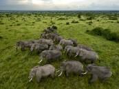 الفيلة تملك أفضل حاسة شم في عالم الحيوانات