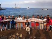 اكتشاف مخلوق بحري مجهول طوله 5 أمتار في كاليفورنيا