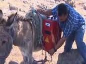 بالفيديو .. رعاة أتراك يتصلون بالإنترنت باستخدام الحمير