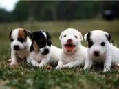 """""""4 كلاب """" يلتهمون جثة ستيني"""