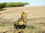 """""""الزراعة"""" تناشد المواطنين بالمحافظة على البيئه"""