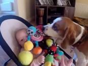 بالفيديو .. كيف أسكت كلب رضيعة تجهش بالبكاء