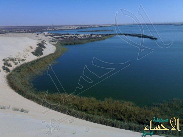 """هيئة الري تدعم جوانب """"بحيرة الأصفر"""" تحسباً لإرتفاع مستوى المياة"""