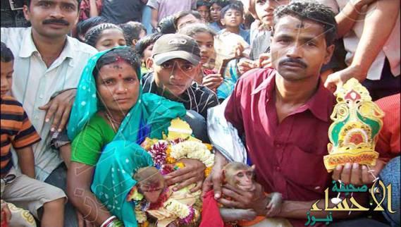قرية هندية تحتفل بزفاف قردين